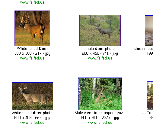 Search for deer images on a federal government site